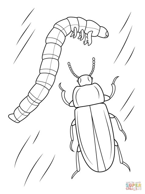 Mealworm Beetle And Larval coloring page | Free Printable