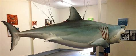 Replica Great White Shark - Streaky Bay | Official Tourism