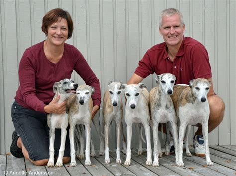 Kennel Magic Colour Whippet