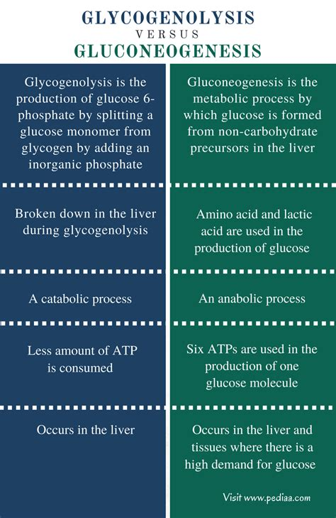 Difference Between Glycogenolysis and Gluconeogenesis