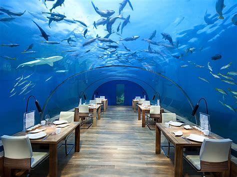 Dine Under the Sea at Ithaa Restaurant in the Maldives   Goway